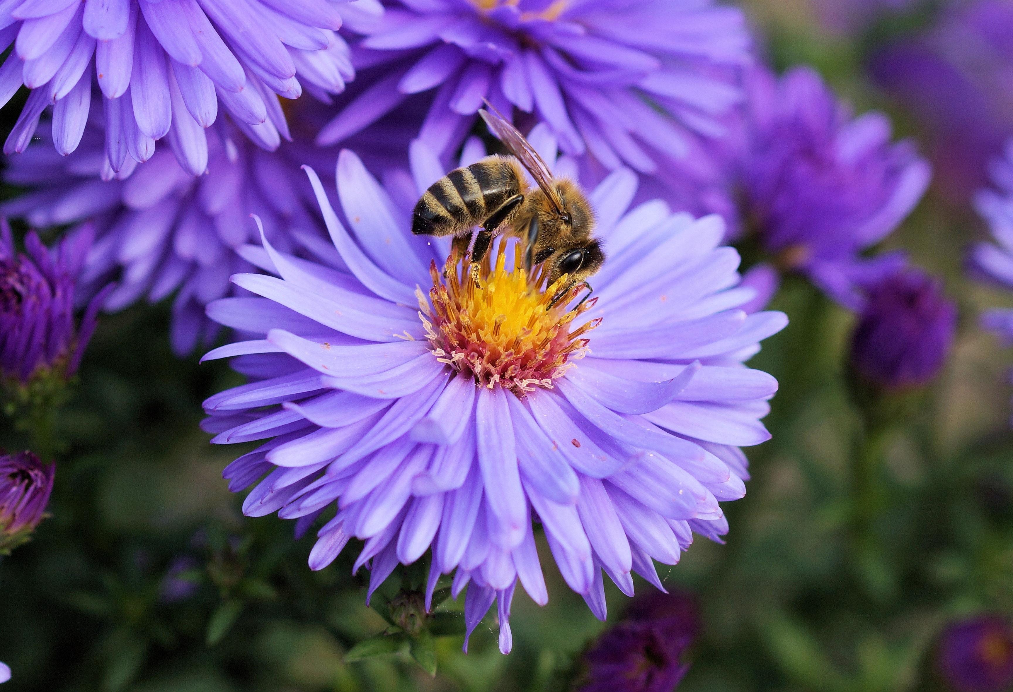 Jad pszczeli w kosmetykach